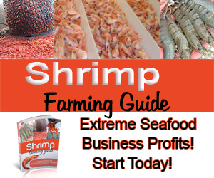 shrimp farms info